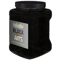 Bulk Edible Ants